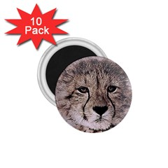Leopard Art Abstract Vintage Baby 1 75  Magnets (10 Pack)