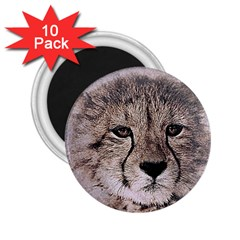 Leopard Art Abstract Vintage Baby 2 25  Magnets (10 Pack)