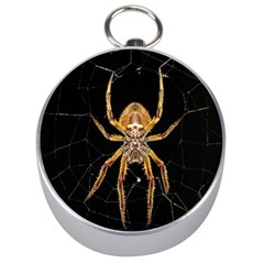 Nsect Macro Spider Colombia Silver Compasses