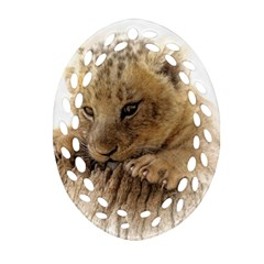 Lion Cub Close Cute Eyes Lookout Oval Filigree Ornament (two Sides)