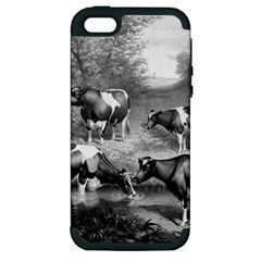 Holstein Fresian Cows Fresian Cows Apple Iphone 5 Hardshell Case (pc+silicone)