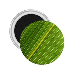 Leaf Plant Nature Pattern 2 25  Magnets