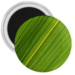 Leaf Plant Nature Pattern 3  Magnets