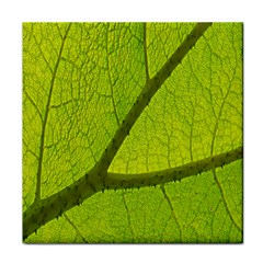 Green Leaf Plant Nature Structure Tile Coasters
