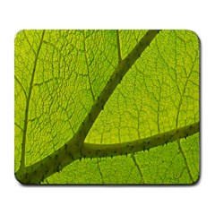 Green Leaf Plant Nature Structure Large Mousepads