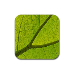 Green Leaf Plant Nature Structure Rubber Square Coaster (4 Pack)