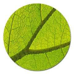Green Leaf Plant Nature Structure Magnet 5  (round)