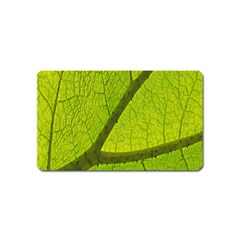Green Leaf Plant Nature Structure Magnet (name Card)