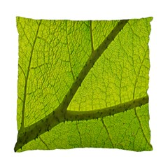 Green Leaf Plant Nature Structure Standard Cushion Case (two Sides)