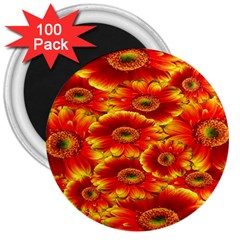 Gerbera Flowers Nature Plant 3  Magnets (100 Pack)