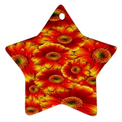 Gerbera Flowers Nature Plant Star Ornament (two Sides)