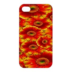 Gerbera Flowers Nature Plant Apple Iphone 4/4s Hardshell Case