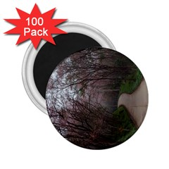 20180111 175704 2 25  Magnets (100 Pack)