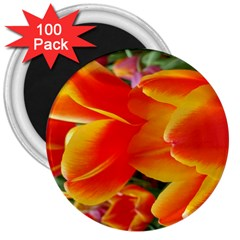 20180115 144714 Hdr 3  Magnets (100 Pack)