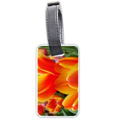 20180115 144714 Hdr Luggage Tags (two Sides)