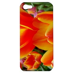 20180115 144714 Hdr Apple Iphone 5 Hardshell Case