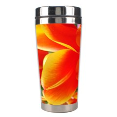 20180115 144714 Hdr Stainless Steel Travel Tumblers