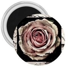 Vintage Rose 3  Magnets