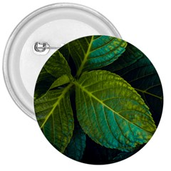 Green Plant Leaf Foliage Nature 3  Buttons