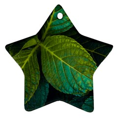 Green Plant Leaf Foliage Nature Ornament (star)
