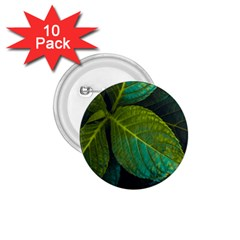 Green Plant Leaf Foliage Nature 1 75  Buttons (10 Pack)