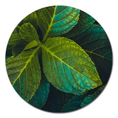 Green Plant Leaf Foliage Nature Magnet 5  (round)