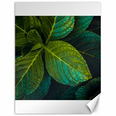 Green Plant Leaf Foliage Nature Canvas 18  X 24