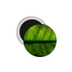 Leaf Nature Green The Leaves 1 75  Magnets