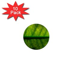 Leaf Nature Green The Leaves 1  Mini Magnet (10 Pack)