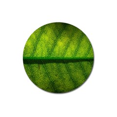 Leaf Nature Green The Leaves Magnet 3  (round)