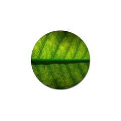 Leaf Nature Green The Leaves Golf Ball Marker (10 Pack)
