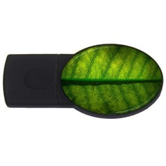Leaf Nature Green The Leaves Usb Flash Drive Oval (2 Gb)