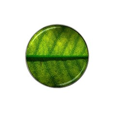 Leaf Nature Green The Leaves Hat Clip Ball Marker (10 Pack)