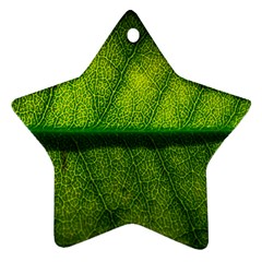 Leaf Nature Green The Leaves Star Ornament (two Sides)