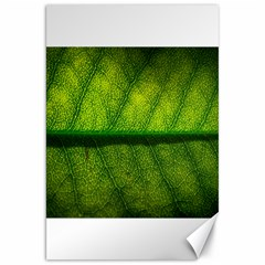 Leaf Nature Green The Leaves Canvas 20  X 30