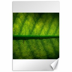 Leaf Nature Green The Leaves Canvas 24  X 36