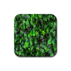 The Leaves Plants Hwalyeob Nature Rubber Coaster (square)