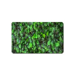 The Leaves Plants Hwalyeob Nature Magnet (name Card)