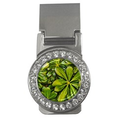 Top View Leaves Money Clips (cz)