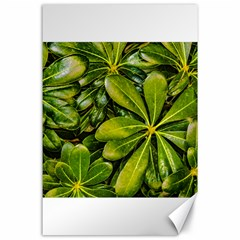 Top View Leaves Canvas 24  X 36