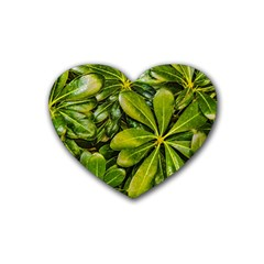 Top View Leaves Heart Coaster (4 Pack)