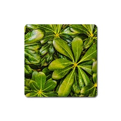 Top View Leaves Square Magnet