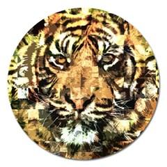 Tiger 1340039 Magnet 5  (round)