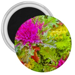 Colored Plants Photo 3  Magnets