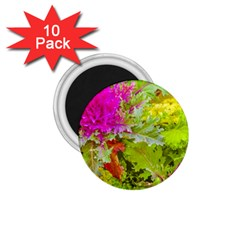 Colored Plants Photo 1 75  Magnets (10 Pack)