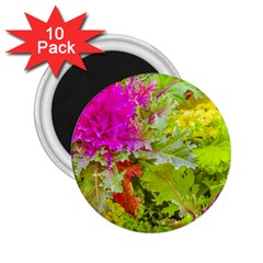 Colored Plants Photo 2 25  Magnets (10 Pack)