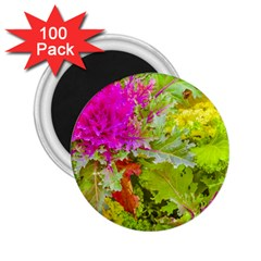 Colored Plants Photo 2 25  Magnets (100 Pack)