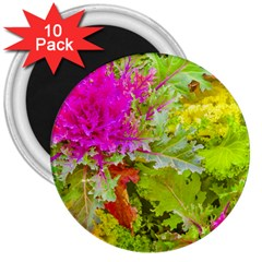 Colored Plants Photo 3  Magnets (10 Pack)