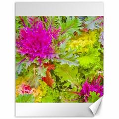Colored Plants Photo Canvas 12  X 16