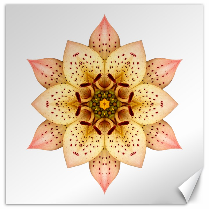 Asiatic Lily II Flower Mandala Canvas 16  x 16